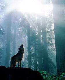 اتاق فرار گرگینه
